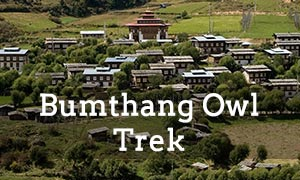 This trek takes you to first to the majestic and spectacular Tiger's Nest in Paro, then to the old capital, Punakha, then off to Trongsa in the central region and then finally to Bumtahang, where you will embark on your 3-day trek surrounded by fantastic views from a high altitude of an unspoiled natural environment endowed with a diverse array of flora and fauna as well as opportunites to visit ancient Buddhist temples and monasteries.